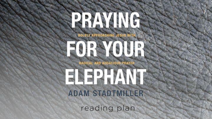 Bijbelleesplan - Bidden voor je olifant